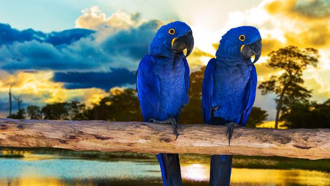 Burung Paling Langka di Dunia, Salah Satunya Dari Indonesia!