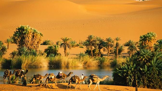 Hewan yang Bisa Hidup di Gurun Sahara
